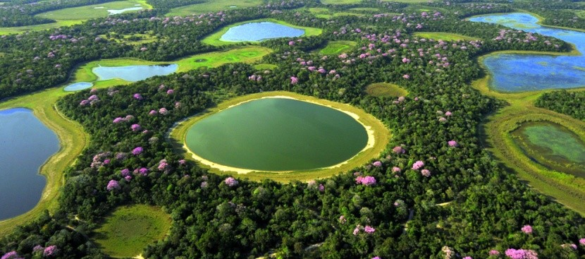 Močály Pantanal, Brazílie