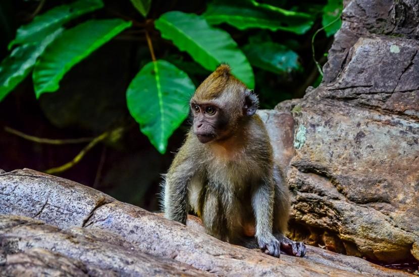 Opice v deštném pralese