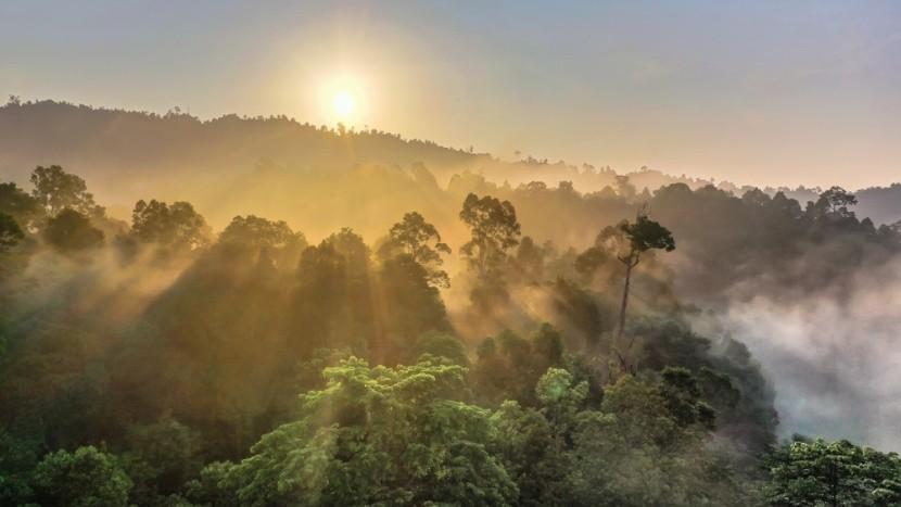 Deštný prales, Borneo, Malajsie