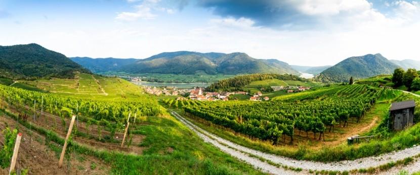 Vinice v údolí Wachau